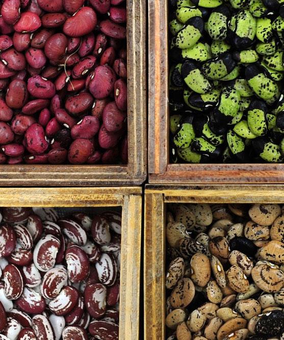 Beans image via Flickr user Global Crop Diversity Trust