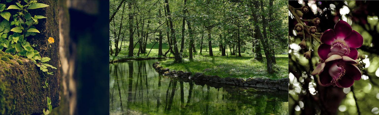 Nature images via Flickr users VinothChandar, Rudolph Getel and debbrata