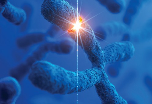 Spa-Genomics...Telomeres and Beyond