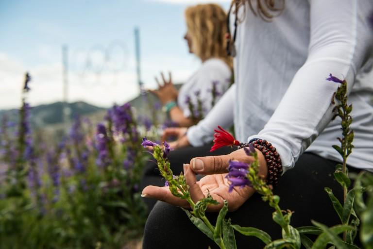 wellness festivals