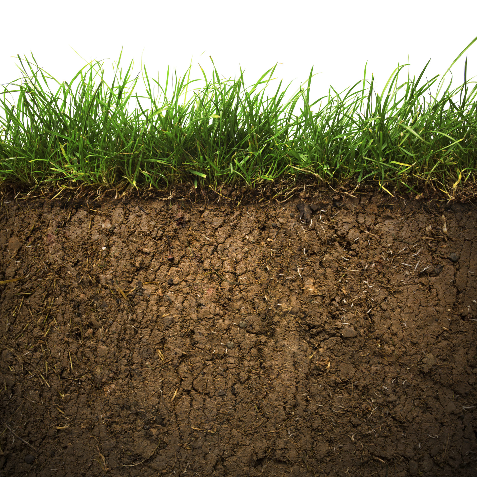 illustration of how dirt delivers grass: the strengthened power of nature