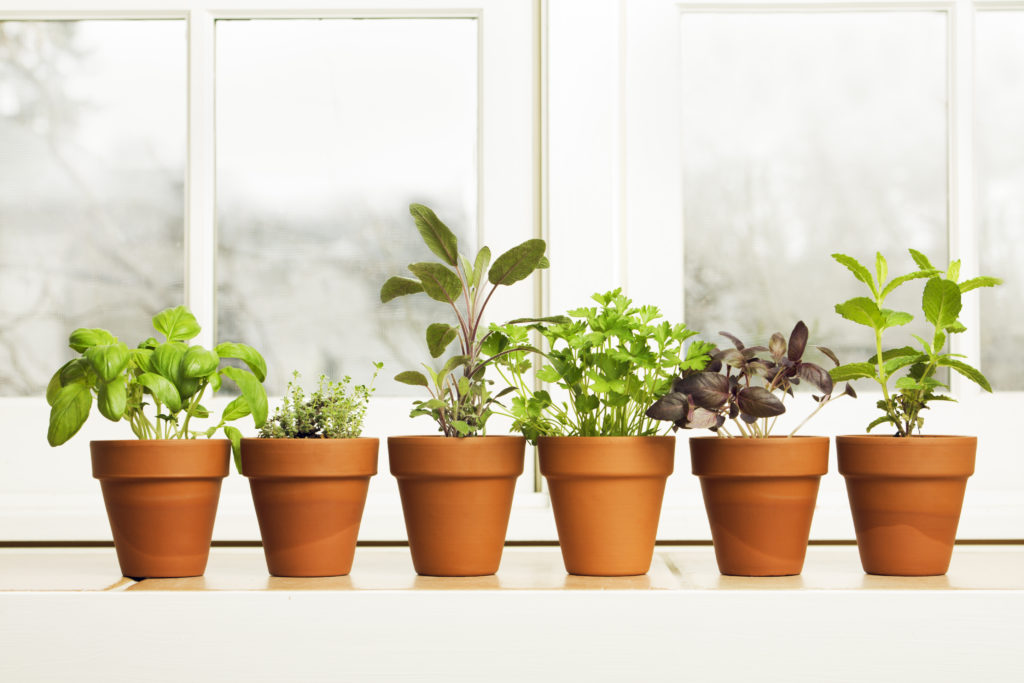 Subject: A potted herb garden by the kitchen window.